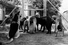 Side B (alessandrafavetto) Tags: blackandwhite bw dog pet blancoynegro dogs cane photography perros