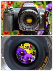 Lente_Fonte_Retro (luke66.man) Tags: 50mm rear front