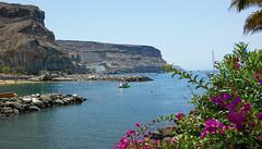 (Mateusz Mathi) Tags: summer flower water de puerto spain rocks mini lg gran g2 canaria mogan mateusz 2015 mogn mathi hiszpania wyspy kanaryjskie