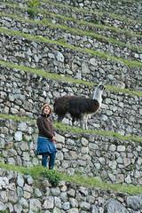 Peru-8558.jpg (Matt and Debbie) Tags: peru llama 2015 wayna winaywayna wiay