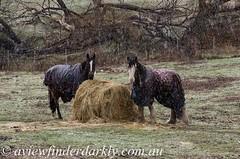 Hay bale (Cardesson) Tags: snow hay hobart bale molesworth justpentax