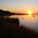 Kedron Brook wetlands, sunrise, august 2015 (23)