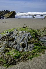 Limpets (jonsomersphotos) Tags: seaweed beach cornwall limpets tregantlebeach secornwall