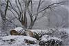 Sony *315 (KKS_51) Tags: sonyalpha7ii winter höchst industrieschnee