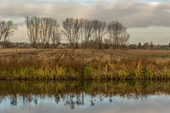 layers (stevefge) Tags: beuningen trees water reflectyourworld reflections sky fields winter landscape nature natuur nl nederland netherlands nederlandvandaag gelderland
