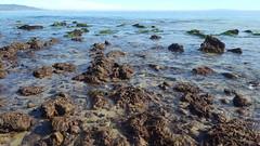 Point Dume Tide Pools, 1/8/17 (lisabeebe) Tags: tidepools malibu tidepool tidalpool pointdume rockybeach