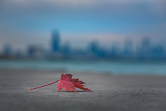 Solitary (Philocycler) Tags: canon depthoffield bokeh chicago chicagoist chicagolakefront red lakemichigan fall solitary skyline