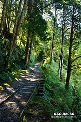 DAO-92086 寧靜,芬多精,森林浴,負離子,舒壓,呼吸,健康,舒適,空氣品質,見晴懷古步道,步道,森林鐵路,鐵道,鐵路,鐵軌,高山,山,樹木,樹林,森林,太平山森林遊樂區,太平山國家森林遊樂區,宜蘭太平山,太平山,宜蘭旅遊景點,宜蘭縣,大同鄉 (盈盈設計影像網 0932046950) Tags: 寧靜 芬多精 森林浴 負離子 舒壓 呼吸 健康 舒適 空氣品質 見晴懷古步道 步道 森林鐵路 鐵道 鐵路 鐵軌 高山 山 樹木 樹林 森林 太平山森林遊樂區 太平山國家森林遊樂區 宜蘭太平山 太平山 宜蘭旅遊景點 宜蘭縣 大同鄉 亞洲 台灣 taiwan 台灣圖片 台灣旅遊 台灣影像 台灣圖庫 台灣景點 台灣風景 數位攝影 風景攝影 風景 攝影 圖庫 圖片 圖像 戶外 戶外攝影 觀光景點 旅遊 觀光 休閒 地標