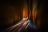 walk in a tunnel (radonracer) Tags: schnee winter running tree allee niederrhein