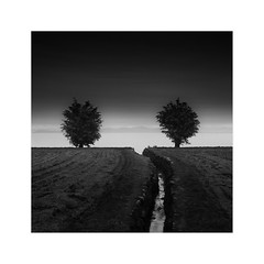 Double Identity (^soulfly) Tags: longexposure nature tree garden pipeline canon5dmark2 ef2470mm bwfilter nd110 japan takashima shigaperfecture