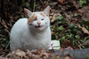 Morningside Park cat forms a yawn (@harryshuldman) Tags: morningside park feral cat stray tabby tabbie neko kat face yawn