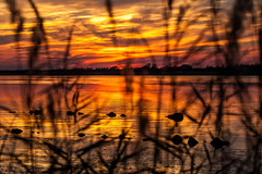 Thru the Reeds (haddartist) Tags: water waterway bay calm still glassy reflection reflecting bayside wetland rock rocks marsh grass reeds shore shoreline trees treeline silhouette silhouetted sky clouds cloudy sunset dusk evening color colorful vibrant warmth blur bokeh backbay baybaywildliferefuge virginiabeach virginia nature natural