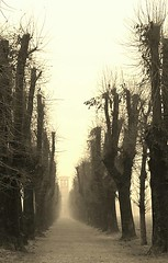 Mapello ( Bergamo )    - Italia (amos.locati) Tags: mapello bergamo madonna di prada amos locati inverno italia italy fog winter paesaggio viale alberi trees arbres copaci nebbia lombardia flickr estrellas