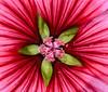 Flowers #2 (foto_morgana) Tags: analogphotography analogefotografie belgium bloemen fleurs flowers nature nikoncoolscan photographieanalogue vuescan