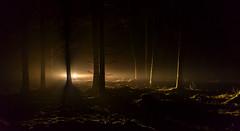 waldlicht (st.weber71) Tags: wald bäume scheinwerfer nacht dunkel nikon tamron outdoor waldboden moos