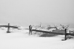 Wind at the Edge of the Sea (brucetopher) Tags: beach snow snowstorm water wind ocean sea bay cold winter blizzard whiteout white black blackandwhite bw blackwhite monochrome contrast tone tones