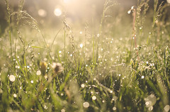Rise & Shine (flashfix) Tags: sunlight ontario canada macro nature grass lines sunshine sunrise nikon bokeh ottawa low dew greens 40mm mothernature morningdew lowperspective 2015 d7000 nikond7000 2minutemacro 2015inphotos may292015