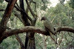 Carved Bird (Unbendable Girder) Tags: camera slr film garden diy nikon kodak seat australia melbourne f100 victoria vic portra enchanted arthurs 400iso c41