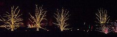 CW359 Longwood Gardens Christmas Lights (listentoreason) Tags: usa night america canon unitedstates pennsylvania scenic favorites places longwoodgardens ef28135mmf3556isusm holidaylighting score30