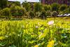 "_MG_2249 (阿蒯) Tags: travel flowers school trees summer white plant macro water yellow photography asia university lotus bokeh taiwan taichung 台灣 植物 水 花朵 荷花 蓮花 植物園 學校 黃色 白色 夏天 樹 睡蓮 wufeng formosan garden"" 阿勃勒 霧峰 台中市 ""depth field"" ""water lilies"" ""botanical 亞洲大學 canon5d2 阿蒯的家"