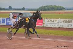 Prevedello et Christophe Martens (Barnie76@ ,) Tags: normandie trot chevaux seinemaritime trotteur hippisme canon60d hippodromemauquenchy