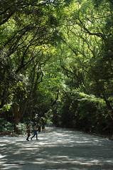 -natsu- (snappir) Tags: people forest 35mm nikon shrine jena flektogon   carlzeiss   atsutajingu d5000