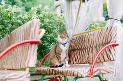 梅花湖旁 Cat 貓咪 (Mr.Sai) Tags: film cat 50mm nikon fuji f14 taiwan nikkor 宜蘭 ai fm2 貓 底片 梅花湖 膠卷 菲林 高雄自由沖掃 業務紀錄用100