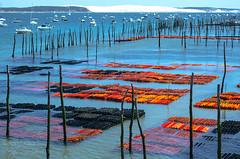 A journey at Cap-ferret ((Virginie Le Carré)) Tags: ocean france colors landscape boat dune atlantic pay oysters bateau coloré huitres atlantique bassindarcachon capferret océan coloful gironde lepyla