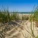 beach dune Rennesse Holland Strand