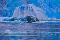 Iceberg at birth -  Svalbard -  Monaco Glacier (harriskeir) Tags: birds svalbard arctic iceberg spitsbergen monacoglacier monacobreen