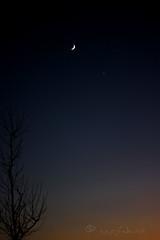 cresent moon and venus at sunset... (ggcphoto) Tags: cresentmoon venus tree silhouette sunset vertical night eveninglight