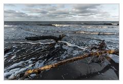 Weststrand (bavare51) Tags: weststrand dars bäumeimwasser ostsee schaum landscape natur strand