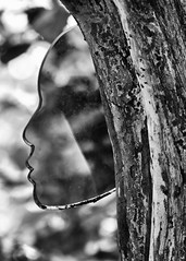 The Tree Nymph (AnyMotion) Tags: face gesicht glass glas sculpture artinstallation tree baum 2016 anymotion travel reisen nature natur tofino botanicalgarden vancouverisland britishcolumbia canada kanada 7d2 canoneos7dmarkii bw blackandwhite sw