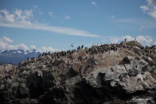 20161129-Argentina.Antarctica-95