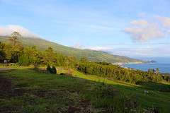 IMG_1233 (markushillman1990) Tags: travel azores pico island landscape nature wild scenery wonder weather sea plant forest cow hills portugal