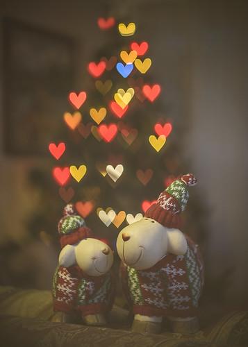 Sheep christmas love