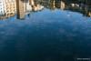 Seagull exhibition (Daniel Moreira) Tags: firenze florence florença toscana tuscany italia italy itália ponte vecchio bridge fiume arno river rio water água reflection reflexo seagulls gaivotas