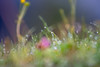 Wiese-Blumen-Makro (flipypictures) Tags: makro closeup green grün gras blumen flower flowers colour color farbe farben colors colours bunt colorful colourful nature natur outdoor hiking hike wandern wanderung nice tele wiese wiesen