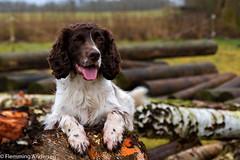 05/52 ZigZag 2017 (Flemming Andersen) Tags: 52weeksfordogs animal outdoor zigzag dog green hund nature stammer trees odense regionsyddanmark denmark dk
