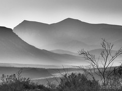 Creosote, Very southern Utah - (1 mile from AZ). . #desert #beauty #bw #blackandwhite #olympus #em5 #olympusem5 #creosote #morninghaze #desertlandscape (JoeCow) Tags: desert beauty bw blackandwhite olympus em5 olympusem5 creosote morninghaze desertlandscape