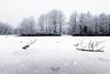 Givré [Explore 05/01/2017] (Lollivier Stéphane) Tags: winter hiver givre neige rennes bretagne france explore amateur nikon stephane lollivier photo