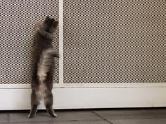 Abrime!!! (Letua) Tags: gato mascota puerta abrime pet cat openthedoor door