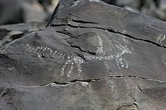 Petroglyph / Little Lake Site (Ron Wolf) Tags: anthropology archaeology littlelake nativeamerican dog petroglyph ringtail rockart zoomorph california