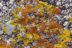 Abstract, by Lichen (Jeff Mitton) Tags: lichen colorado earthnaturelife wondersofnature