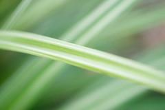 Croisement (christophe.laigle) Tags: couleurs végétal macro colours xf60mm nature graphique fuji vert abstrait green xpro2 christophelaigle vegetal