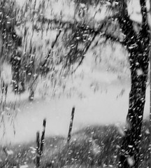 Blizzard (Sappho et amicae) Tags: winter blizzard sapphoetamicae