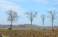 """Les 4 sentinelles (Brigitte .. . """"Tatie Clic"""") Tags: 2015121934 décembre hiver paysage campagne arbre quatre labours agriculture champ pré prairie bleu albret brume lotetgaronne aquitaine francesudouest 7dwf"""