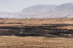DSC06820_DxO_Bildgröße ändern (Jan Dunzweiler) Tags: afrika madagaskar fahrradreise radreise momotas africanbikers jandunzweiler termite termitenhügel brandrodung