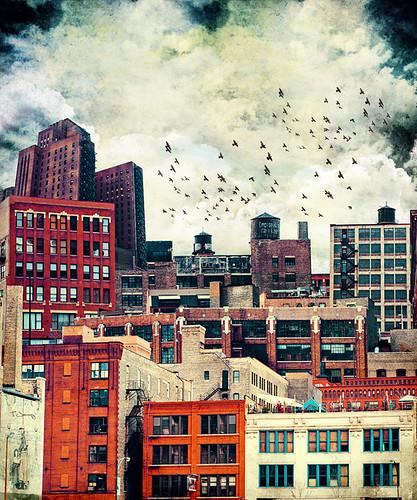 tim jarosz rooftop 6