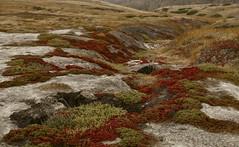 Channel Islands National Park - Santa Cruz Island (nebulous 1) Tags: nature water birds rock island boat flora nikon tour overcast pacificocean santacruzisland channelislandsnationalpark islandpackers d7000 nebulous1